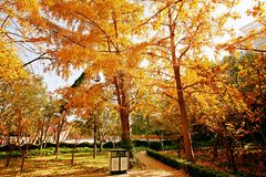 Memoria Zhengzhou di autunno Fotografia Stock