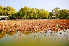 Memoria Zhengzhou di autunno Immagini Stock