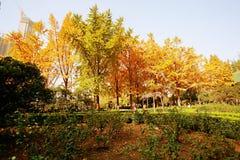 Memoria Zhengzhou di autunno Fotografie Stock Libere da Diritti