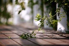 Memoria Zhengzhou di autunno fotografie stock