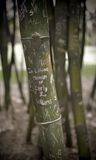 Memorial Bamboo Tree. Bamboo stem inscribed with a memorial message Royalty Free Stock Photography