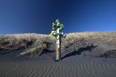 Memorial cross in sand dune Stock Photos