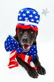 Memorial day dog. Black Labrador mix wearing patriotic costume Royalty Free Stock Images
