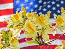 Memorial Day flagga med gula blommor fotografering för bildbyråer