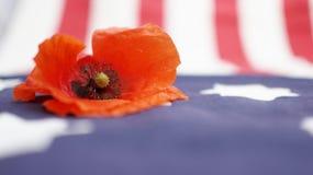 Memorial Day. Poppy on Flag. Stock Photos