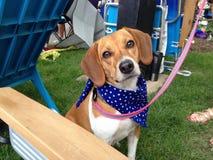 Memorial Day -Spürhund Stockbild