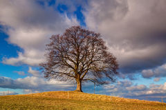 Memorial maple tree on the mystic place in Votice, Czech Republi Stock Photography