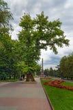 Memorial poplar tree on Square of Fallen Fighters. Volgograd. Volgograd, Russia - August 31, 2016: Memorial poplar tree on Square of Fallen Fighters. It is the royalty free stock photos