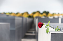 Memorial to the Murdered Jews of Europe, Berlin, Germany. Lonely Rose Flower Stock Photography