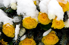 Memorial Wreath 01. Snow covered yellow roses as part of a memorial wreath royalty free stock photo