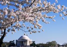 Memoriale del Jefferson Fotografie Stock Libere da Diritti