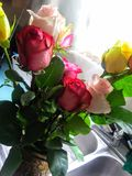 Memorias amarillas y rosadas de Rose imagenes de archivo