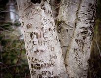 Memorias del árbol de la juventud Imagen de archivo libre de regalías