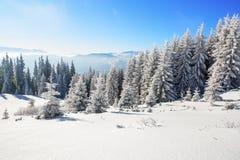 Memorie de jour d'été l'hiver givré Photos libres de droits