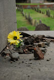 Flower in Rubble Royalty Free Stock Photos