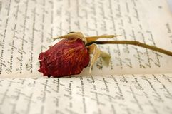 Memories. Closeup of dried red rose on an open old book Stock Photos