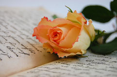 Memories. Delicate rose on an open old book Royalty Free Stock Photography