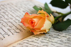 Memories. Delicate rose on an open old book Stock Photo