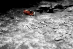 Memories of Salem. Photo of a grave taken in Salem, Mass Stock Photography