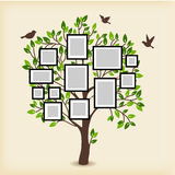 Memories tree with frames Royalty Free Stock Images