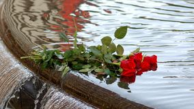 In memory of 22/7. Roses laid down in memory of 22/7 in oslo Norway royalty free stock image
