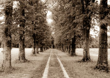 Memory Lane. Lined with trees Stock Photo