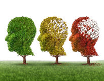 Memory Loss. And brain aging due to dementia and alzheimers disease as a medical icon of a group of color changing autumn fall trees shaped as a human head Stock Photography