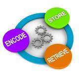 Memory process. Steps, encode, store and retrieve Stock Photo