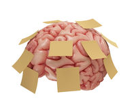 Memory Sticky Notes. Human brain with yellow sticky notes attached. Concept of good or bad memory. Clipping path included Stock Photos