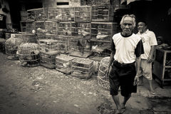 Men of the bird markets of Malang, Indonesia Stock Image