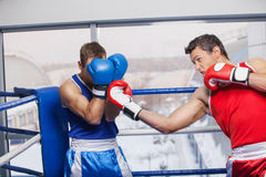 Men boxing. Two men boxing on the boxing ring Royalty Free Stock Photos