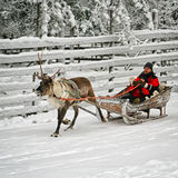 Men and boy at race on the reindeer sledges Stock Images