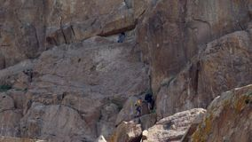Men climbers hiking and climbing the rock. Men climbers hiking and climbing the mountain rock in summer stock footage