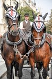 Men coachman driving a carriage drawn by two horses on the stree Royalty Free Stock Photography