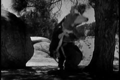Men in cowhide costume falling out of tree and running away stock video