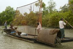 Men do fishing with otters, Mongla, Bangladesh. Stock Photos