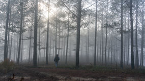The men in fogging pine forest and the sun at Dalat- Vietnam. Sunrises somwhere near Dalat city - in Dalat- VietNam- LamDong- VietNam stock photography