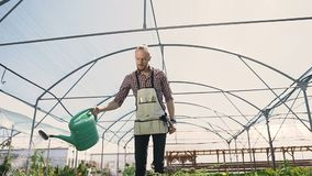 Man gardener in green apron watering plants and flowers with garden sprayer in greenhouse. Drops of water on the stock video