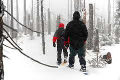 Men goes through the woods on snowshoes Stock Images