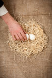 Men hand taking one white egg from nest Royalty Free Stock Images
