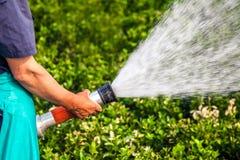 Men hand watering the plants Stock Photo