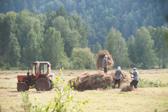 Men haymaking Royalty Free Stock Images