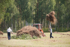 Men haymaking. Russia field country hay men haymaking Stock Photo