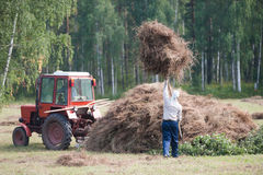 Men haymaking Stock Image