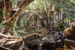 Men hiking in the tropical rainforest. Climbing ancient ruins in Cambodia royalty free stock photography