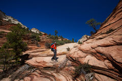 Men is hiking in Zion National Par, Utah, USA Stock Photography