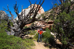 Men is hiking in Zion National Par, Utah, USA Stock Photo