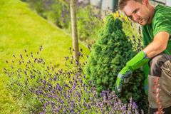 The Men and His Garden Royalty Free Stock Photo