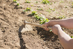 Men with a hoe in his garden Stock Photo