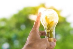 Men hold light bulbs with sun in the daytime, with tree bokeh backdrops using wallpaper or background for idea work for business w. Ork Stock Photo
